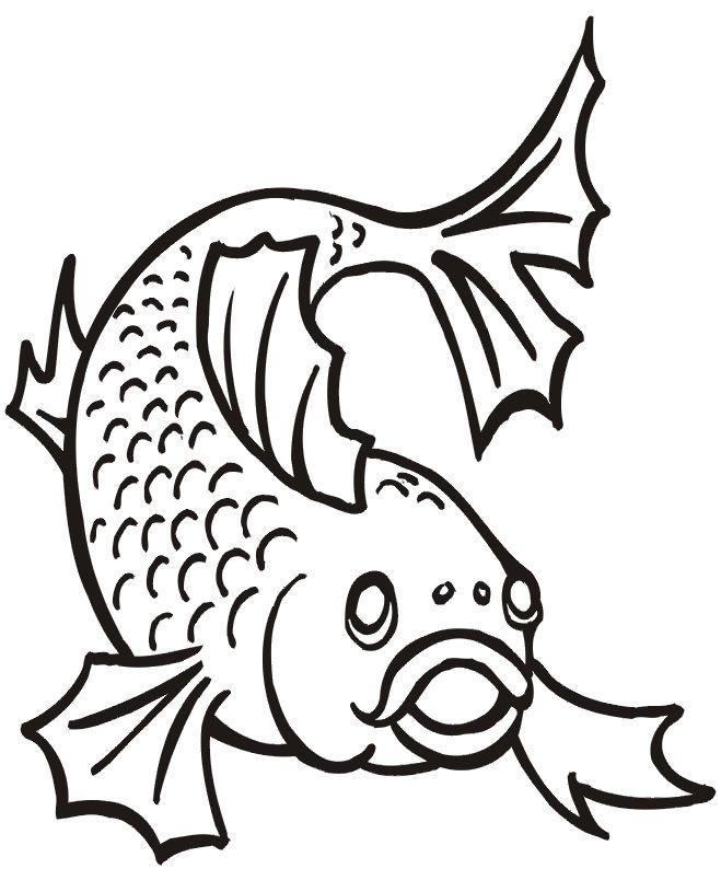 195 best Animais aqu ticos Aquatic