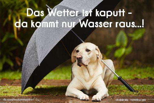 #Regen #Hund #Zitat #Spruch #luckypet