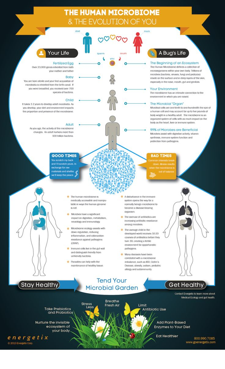 The Human Microbiome - Infographic