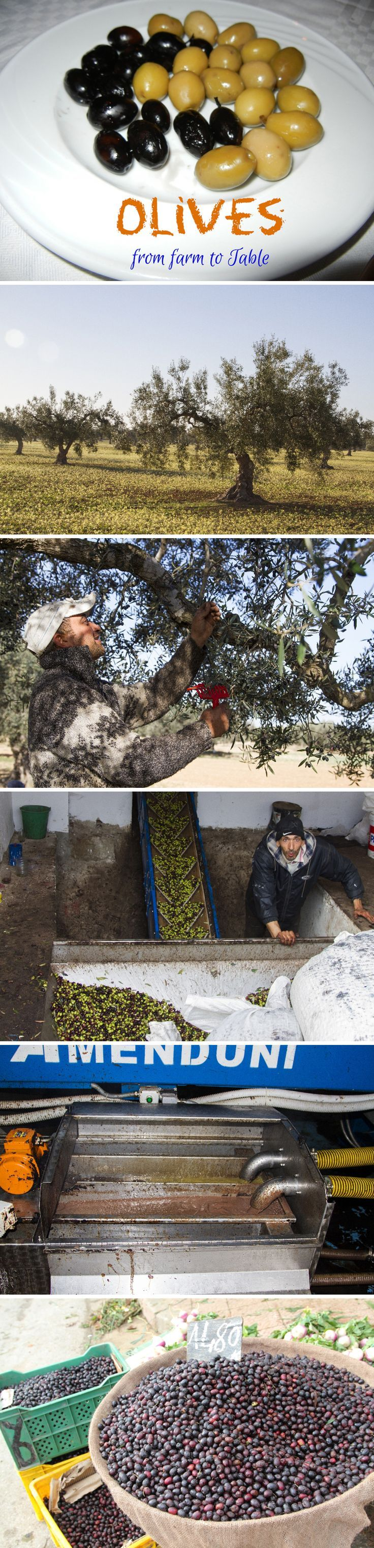Tunisia Olives from Tree to Table - A Photo Essay