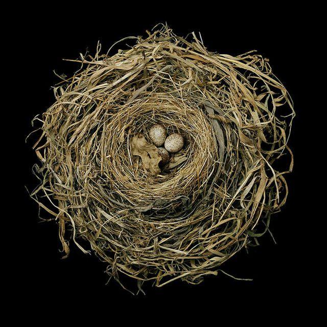 奥深く、そして美しい自然の芸術「鳥の巣」の写真24枚 - DNA