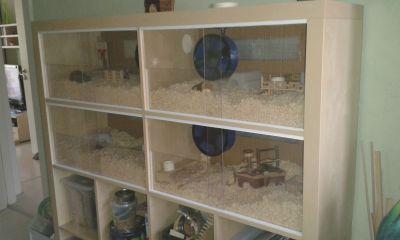 hamsteroase expedit umbau hamster pinterest umbau k fig und ratten. Black Bedroom Furniture Sets. Home Design Ideas