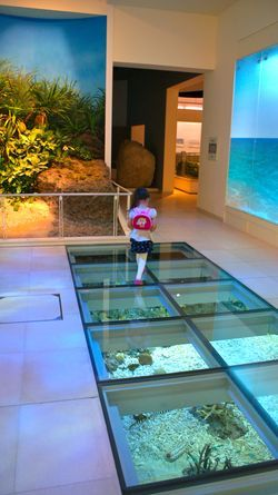 Okinawa Prefectural Museum Natural History