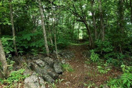 Reveler Conservation Area, Crysler, Ontario