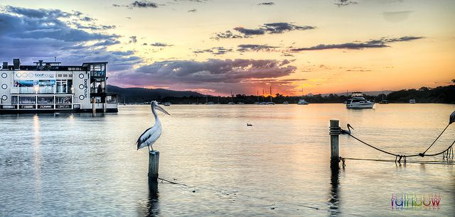 "Noosa River Sunset  The gorgeous Noosa River sunset- overlooking the Boathouse ""Floating"" Restaurant. And whats Noosa without a Pelican? :) www.facebook.com/rainbowphotography.au"