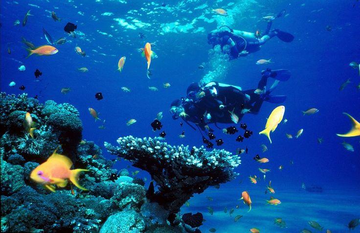 Scuba Diving in Puducherry, India