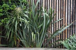 Fiona Brockhoff Design » Favourite coastal plants for south eastern Victoria