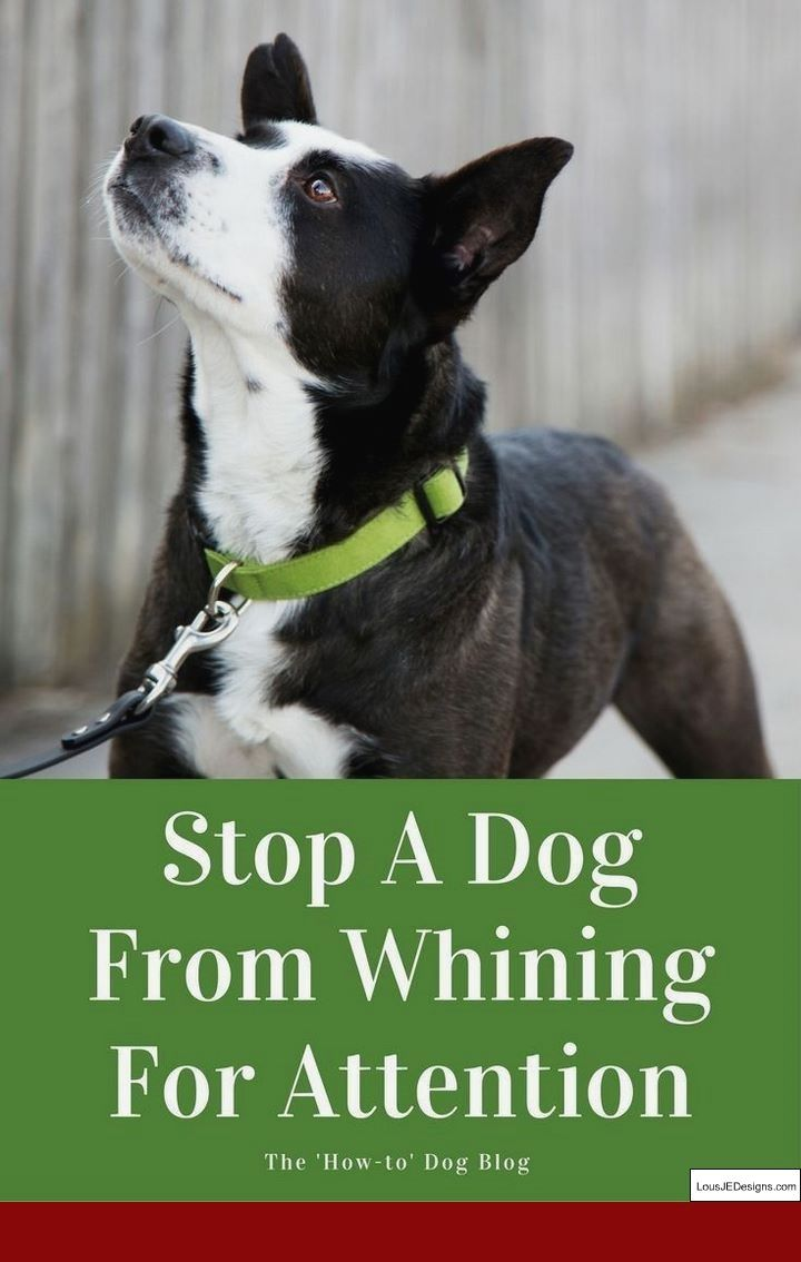 Dog Training Tips For Obedience And Pics Of How To Train Your Dog
