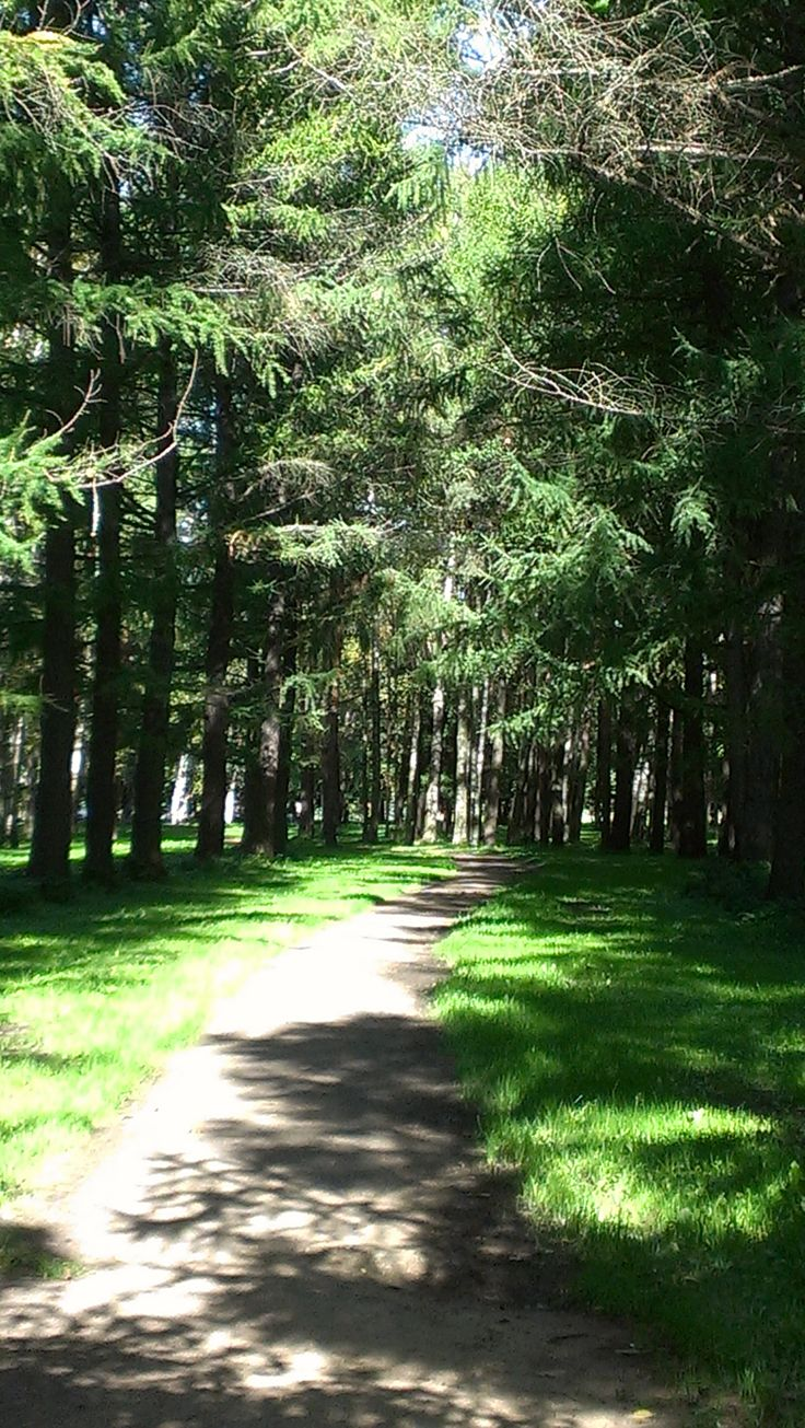 A forest pathway in Victory Park, Saint Petersburg, Russia