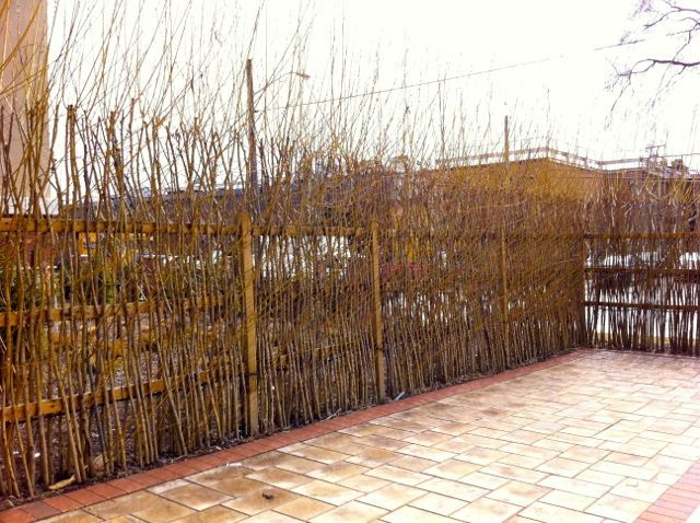 Privacy Fence And Sound Barrier With Willow Rods. Incorporated Into A  Framework That Will Eventually Decompose Away (wood). Also Fitted With A  Drip Line To ...
