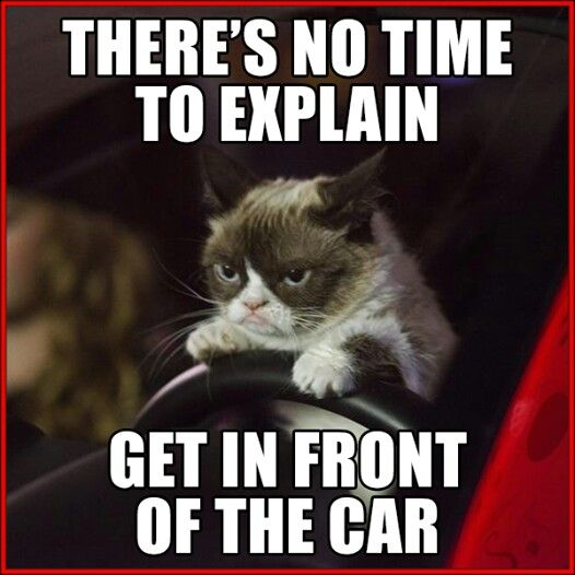 No, no, that's get IN the car, Grumpy!