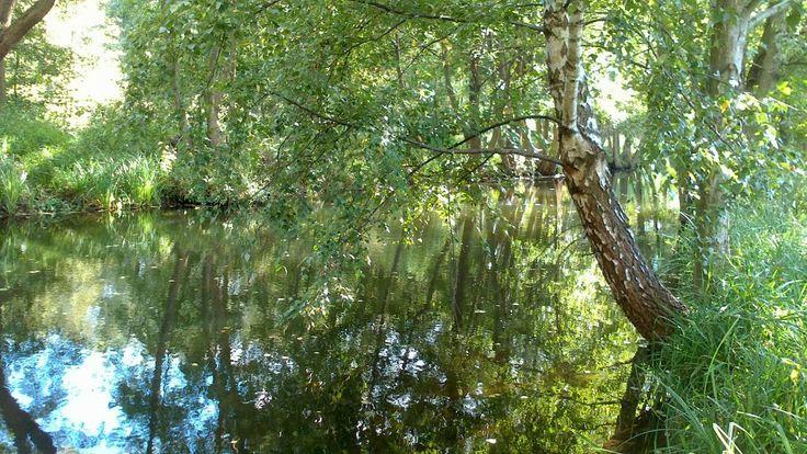 Plonia - River at Spring