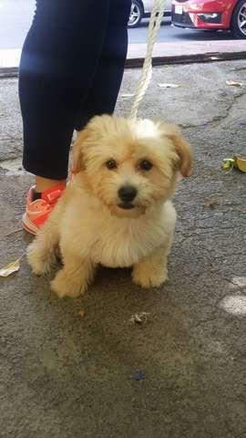 MIL ANUNCIOS.COM - Regalo perro. Compra-venta de perros regalo perro. Regalo de cachorros..