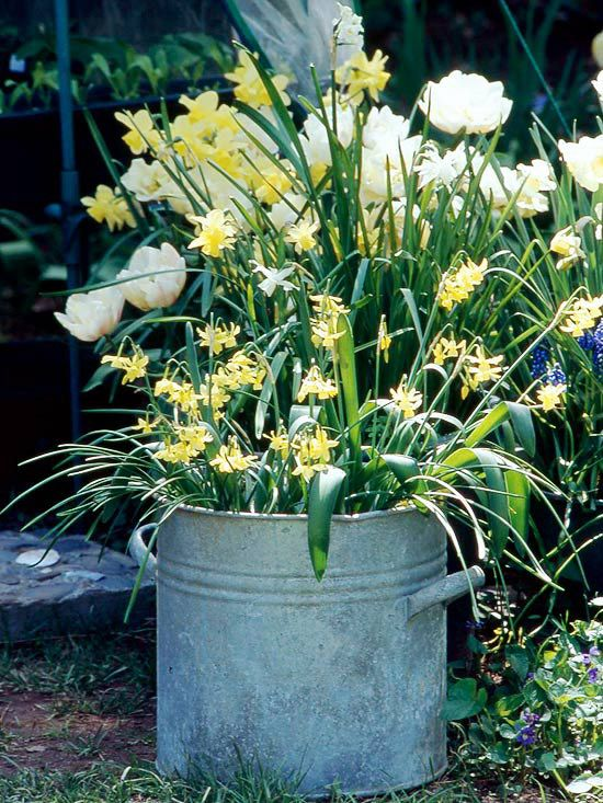 Design Idea: Layer Perennial Bulbs-For a dramatic show of spring-flowering bulbs, plant smaller perennial species such as crocus or scilla over bigger bulbs such as daffodils, tulips, and lilies. That way you'll get twice the color in the same space