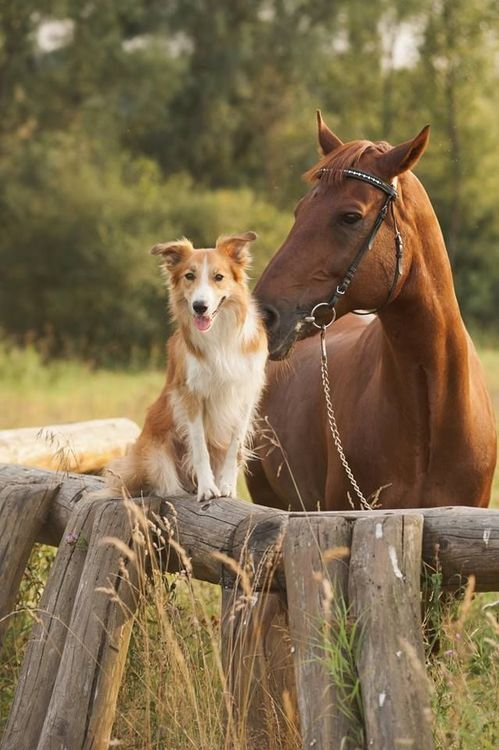 Dog and Horse, Friends.