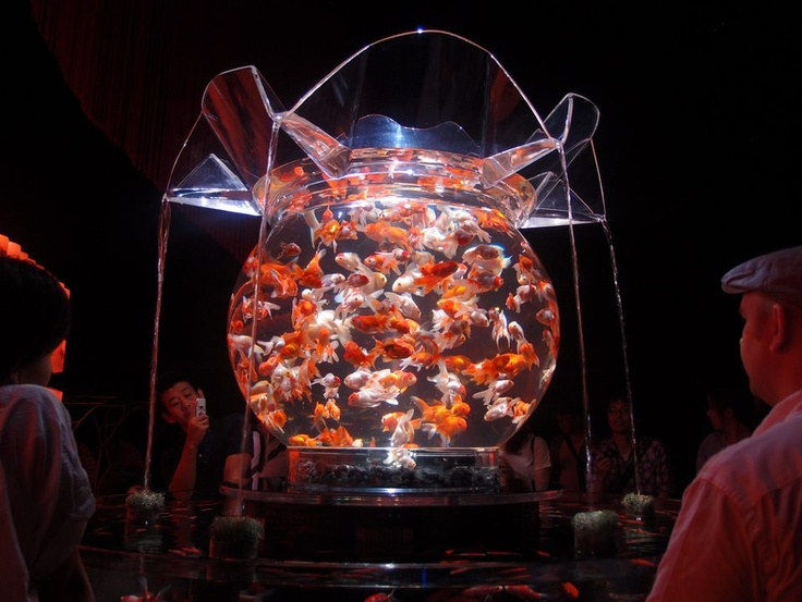 This is an amazing fish tank!