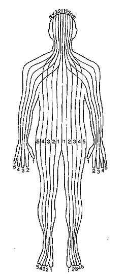 Each point on the foot, hand or ear was always associated with the body parts within the Zone of its alignment.