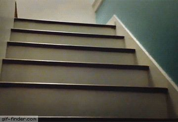 Pug hops up stairs | Gif Finder – Find and Share funny animated gifs