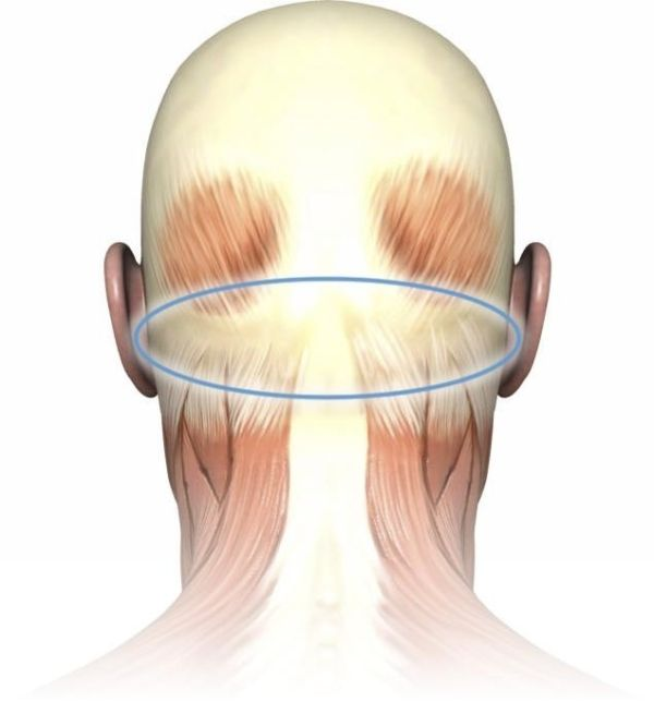 According to recent scientific research, this is where essential oilsfor tension headaches(Frankincense, Lavender, Vetiver, Clary Sage…) should be applied. This region is called the subocci…