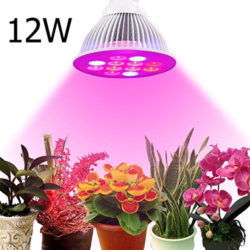 die besten 25 led pflanzenlampe ideen auf pinterest led lampe terrarium die wolke film und. Black Bedroom Furniture Sets. Home Design Ideas