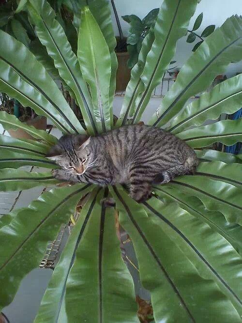 amazing shot cat bush