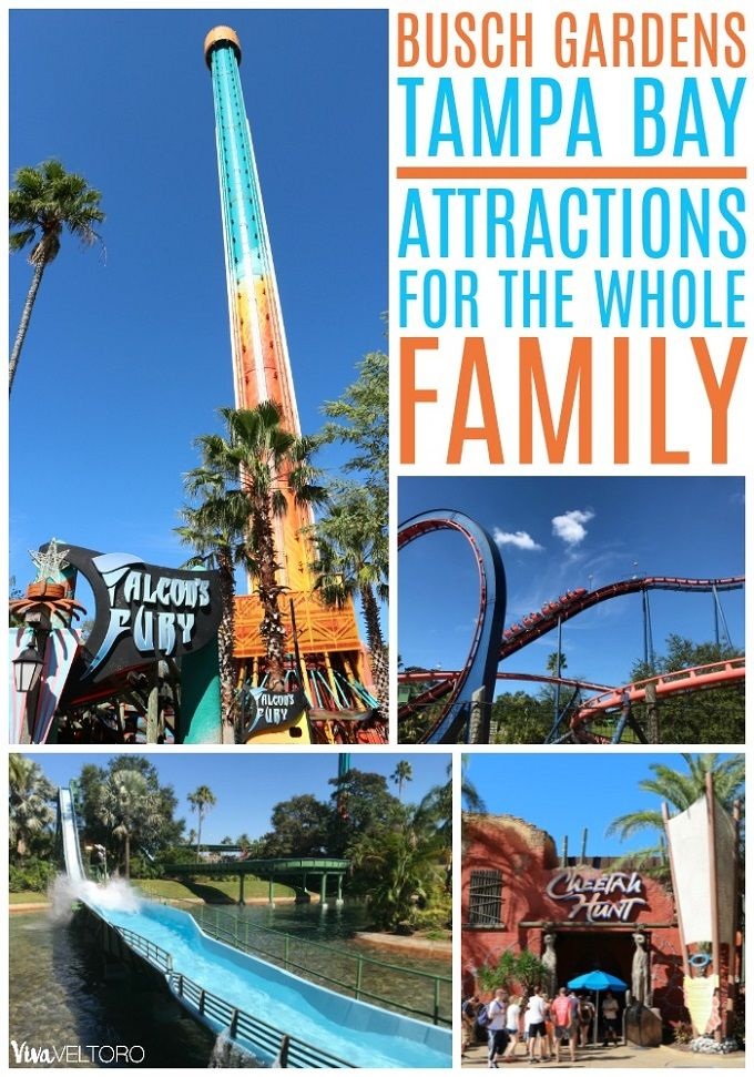 5b1864df2ceaabfcfd974cba667d1af0 - Busch Gardens Tampa Things To Do