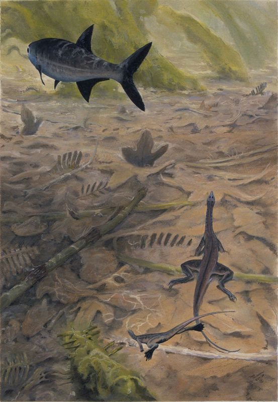 The aquatic reptile tanytrachelos in a warm freshwater for Predatory freshwater fish