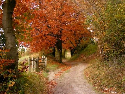 The amber avenue between Pulpit Hill and Grangelands, Chiltern Hills, Buckinghamshire, England