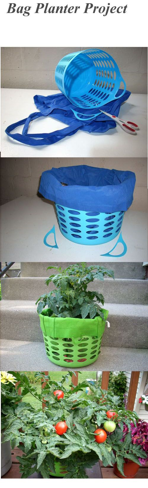 Patio Tomato plant in a clothe bag from the grocery store set inside a accessory basket fro the dollar store. Idea from growing potatoes in a sack to let the roots breath. Mature plants need water every 2 days. You can see the great results.  jp