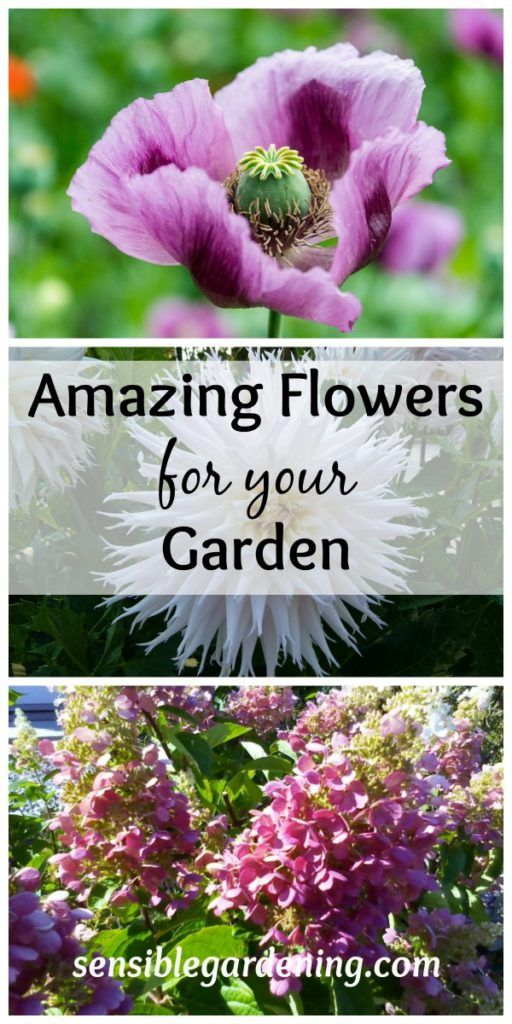 Amazing Flowers for your Garden with Sensible Gardening
