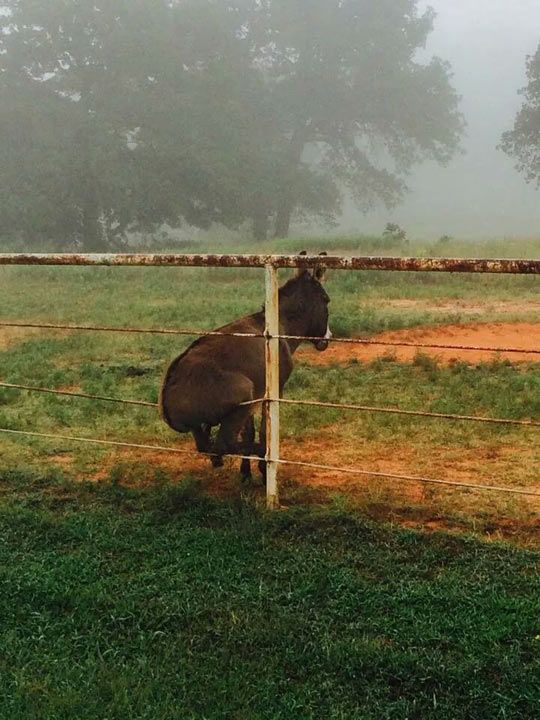 Donkey On A Fence Orted Interesting Pinterest Funny Animals And Animal Quotes