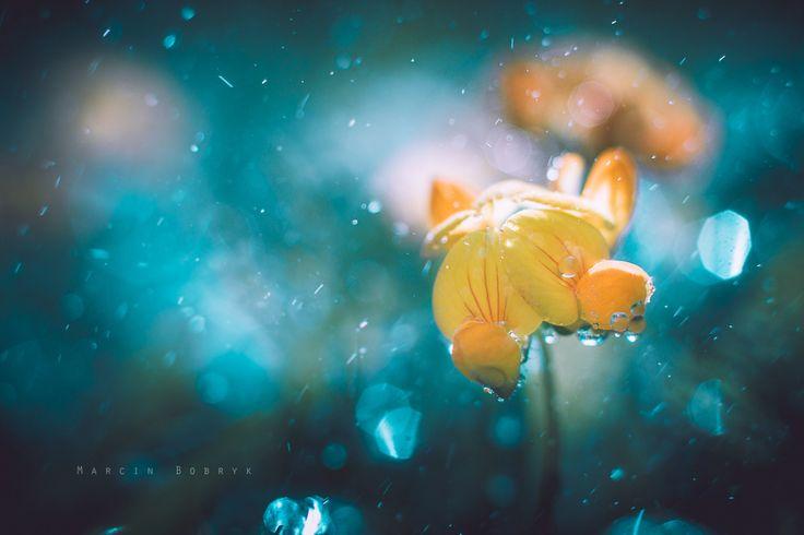 """Nazwę to """"kwiatek"""" - To mój pierwszy krok w tego typu zdjęcia."""