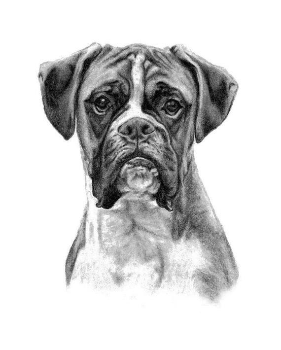 Boxer Dog Black White Print Copy Of Hand Drawn Original Etsy Boxer Dogs Art Boxer Dogs Dog Sketch