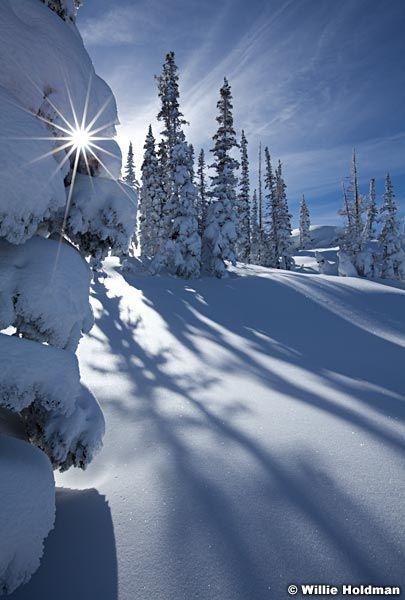 Sunburst behind pine tree with long shadows in winter, Deer Valley, Utah favorite - Landscape Nature Photographer Willie Holdman