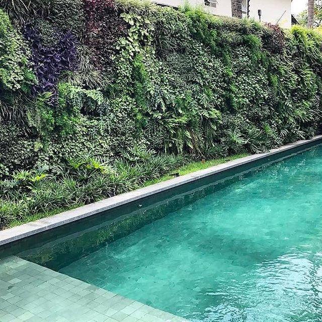 Projeto  Arquitetura Fernanda Marques ; paisagismo Maurício Prada.  #Repost @mauriciopradapaisagismo ・・・ Dia de visita , crescendo ! #landscape #landscapelover #landscapedesign #green #greenery #gardening #work #tropical #pool #nature #design & #architecture by @fernandamarquesarquiteta