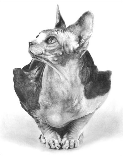 Sphynx Cat Pencil Drawing | Flickr - Photo Sharing!