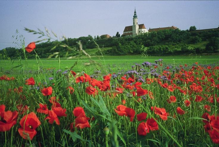 #Hausleiten in Lower Austria - Europe