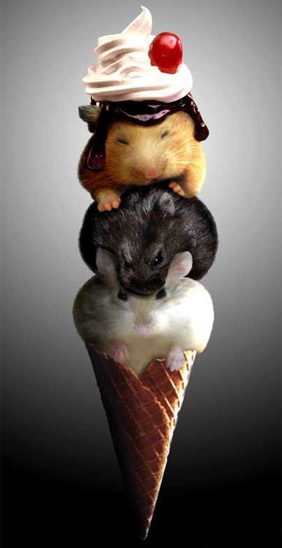 3 hamsters in cone