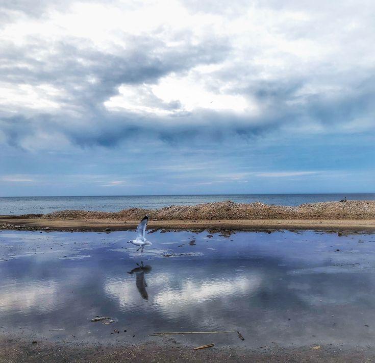 Long Island: 1390 Best Long Island Images On Pinterest