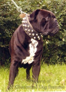 Leavitt Bulldog