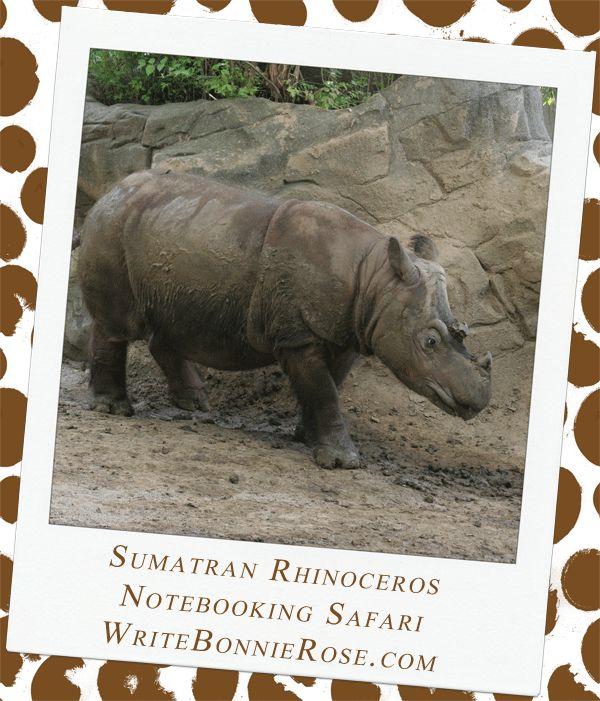 Notebooking Safari - Indonesia and Sumatran Rhinoceros. Our next stop in our notebooking safari across Asia takes us to the Indonesian islands of Kalimantan and Sumatra.