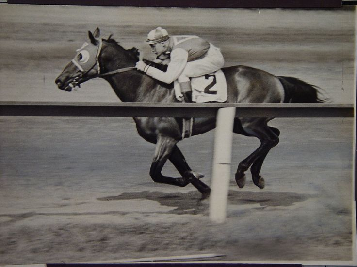Seabiscuit was a champion Thoroughbred racehorse in the United States. A small horse, Seabiscuit had an inauspicious start to his racing career, but became an unlikely champion and a symbol of hope to many Americans during the Great Depression.