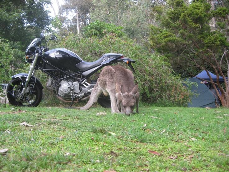 Bike & Nature! Kangaroo & camping