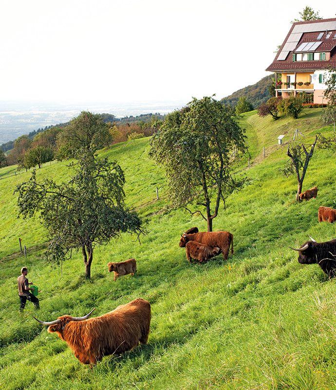 Tippling and walking in #Germany's Black Forest may just have you over the mooooon: http://enroute.aircanada.com/en/articles/schnaps-trail-black-forest-germany // Marcher et lever le coude en Forêt-Noire en #Allemagne, une vraie vacherie: http://enroute.aircanada.com/fr/articles/4-choses-a-faire-dans-la-foret-noire-en-allemagne
