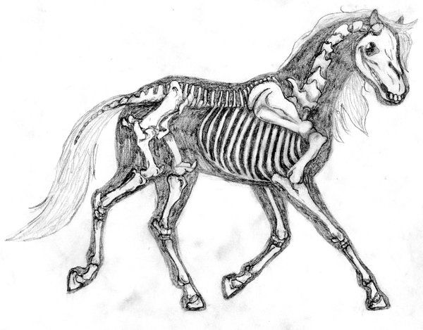 114 best drawing horses 101: anatomy images on Pinterest