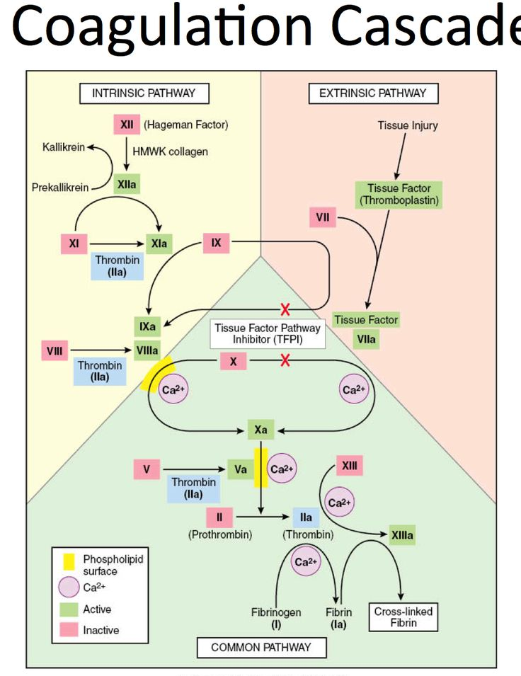 hemostasis coagulation and factor xii contact The contact system consists of three zymogens, factor xii, prekallikrein and factor  xi and  a bleeding tendency and therefore are not essential for hemostasis.