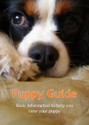 Puppy Guide - All the basic information to help you and your puppy.    http://www.petrecordbooks.com/shop/puppy-guide