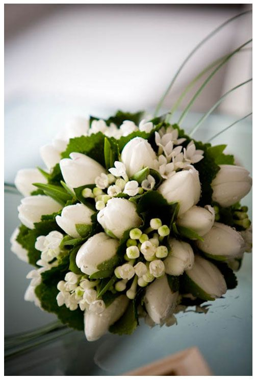 white tulips and bouvardia