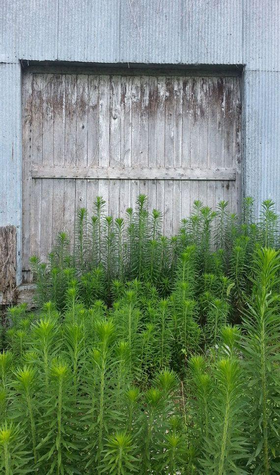 $1000 - $1500  (Normal price $2500-$3500)  SLIDING BARN DOORS w/ track