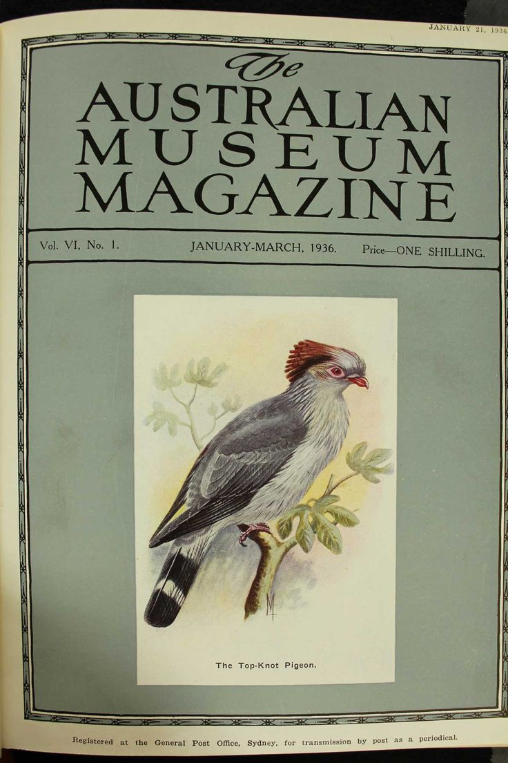 Australian-Museum-Magazine. The Top-Knot Pigeon. Illustrator: Lilian Medland. http://australianmuseum.net.au/Australian-Museum-Magazine-1921-1942/